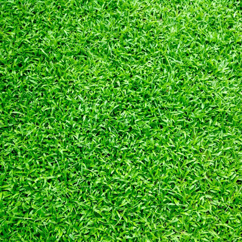 Wat zijn graszoden?